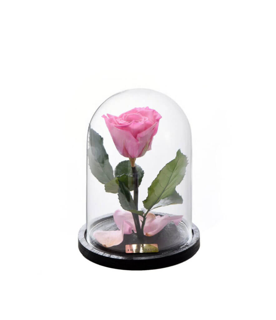 PER SEMPRE PINK SMALL (BEAUTY & THE BEAST)