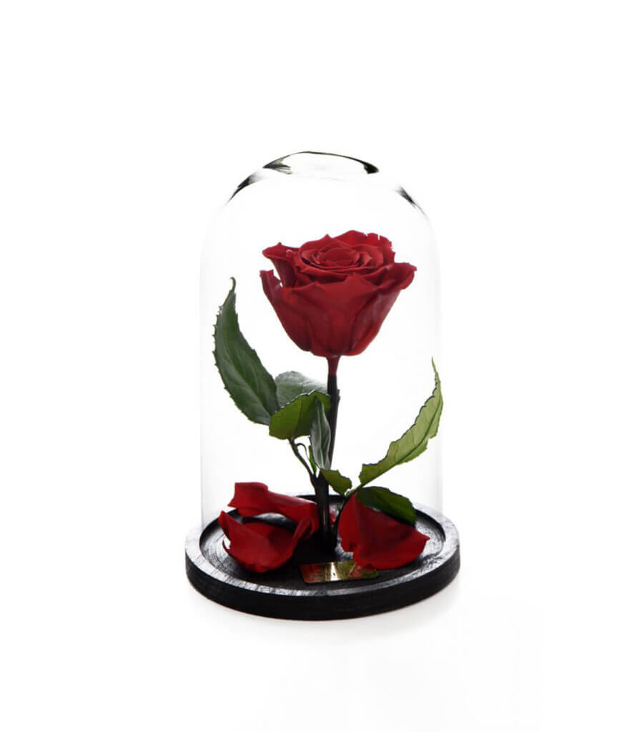 Per Sempre Small Red (Beauty & the Beast)