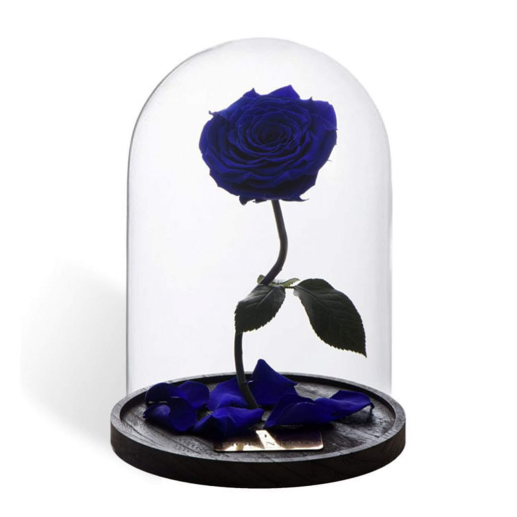 BELLE'S SECRET – ROYAL BLUE L