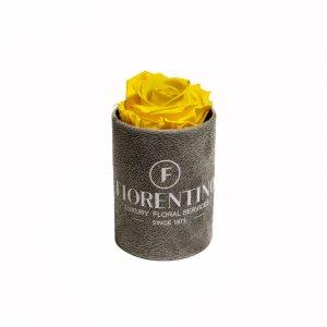ventuno solo yellow rose